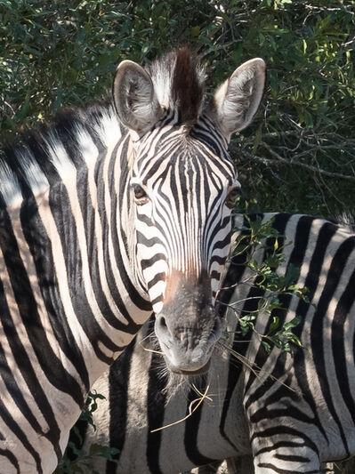 E.A. Kahane, 'Zebra', 2017