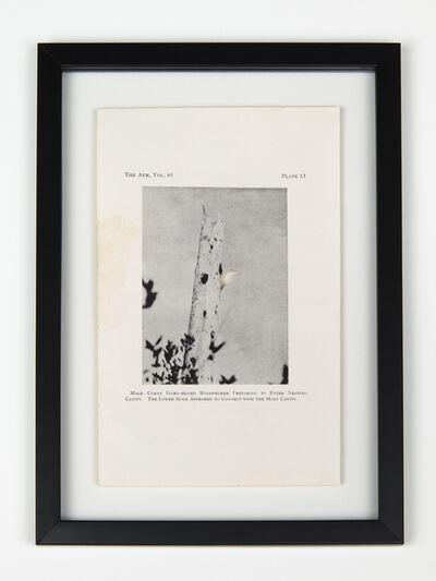 Brandon Ballengée, 'RIP Cuban Ivory-Billed Woodpecker: After John Dennis, 1948', 2014