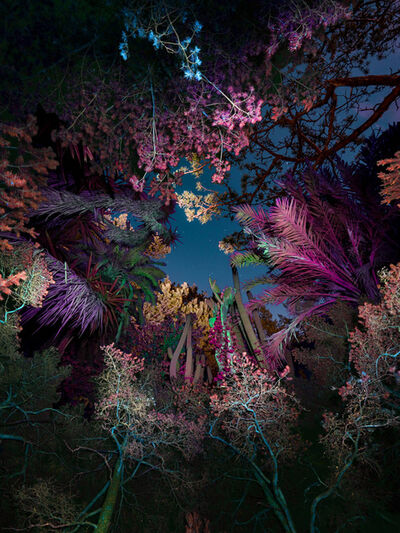 Linda Westin, 'Illuminated Dendrology - Entropic Jungle'