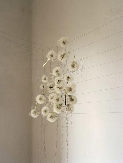 Elspeth Diederix, 'Dandelions', 2007