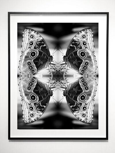 Indira Cesarine, 'Papiliones No 2 ', 2015