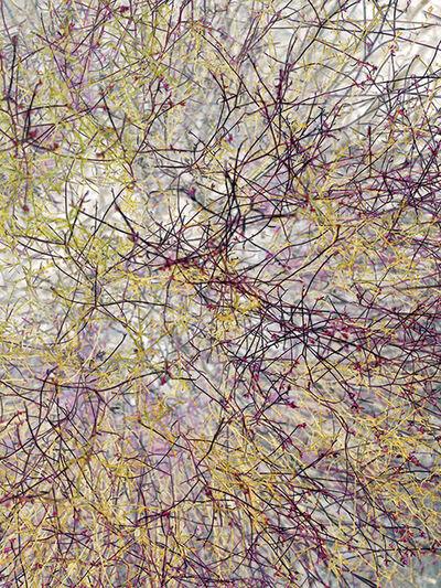 Irene Imfeld, 'Zone of Transformation 2973', 2015