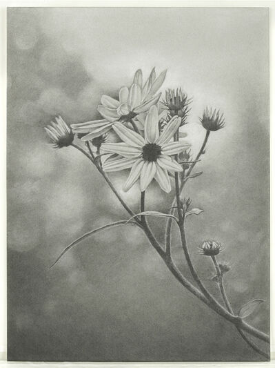 Mary Reilly, 'Wildflower, Central Park', 2011
