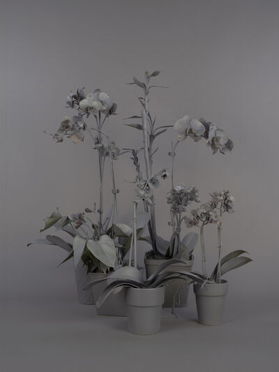 Stephanie Syjuco, 'Neutral Orchids (Cluster 1)', 2016