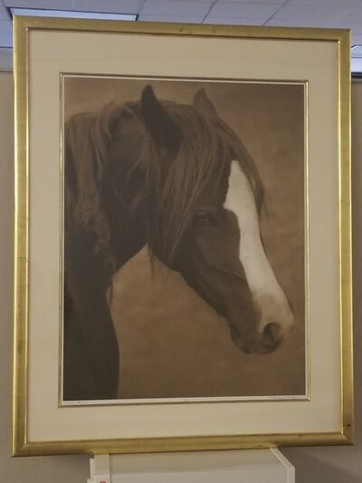 Michael Eastman, 'Horse #226', ca. 2000