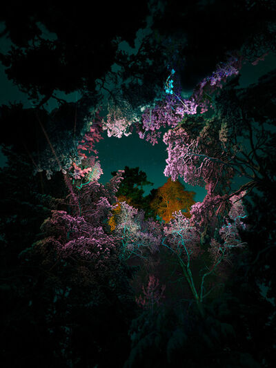 Linda Westin, 'Illuminated Dendrology - Pink Matter'