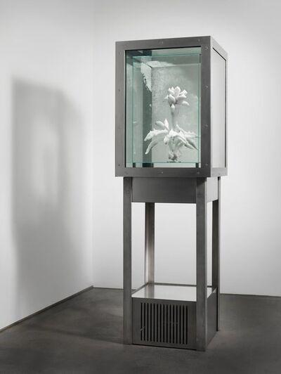 Julian Charrière, 'Tropisme', 2015