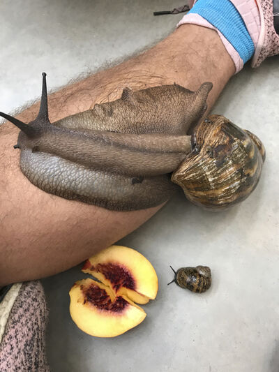 Juergen Teller, 'Leg, snails and peaches', 2017