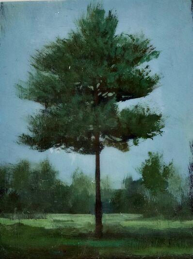 Peter Hoffer, 'Cedar', 2021