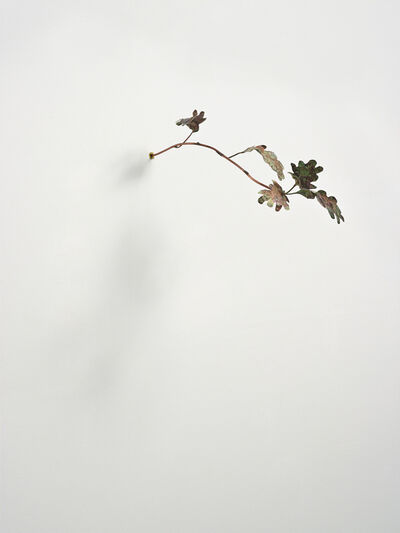 Rolf Nowotny, 'Pinocchio Leaves (oak)', 2013