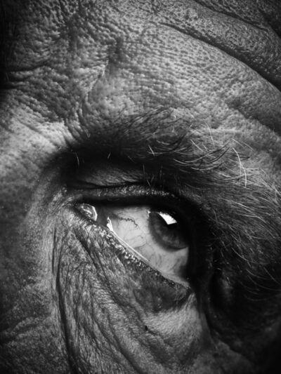 Sandro Miller, 'Bill Brandt - Eyes IV (1960 - 1964)', 2014