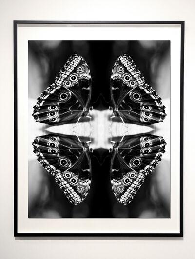 Indira Cesarine, 'Papiliones No 4 ', 2015