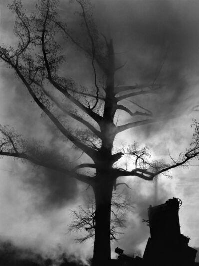 Debbie Fleming Caffery, 'Cypress Tree', 2014