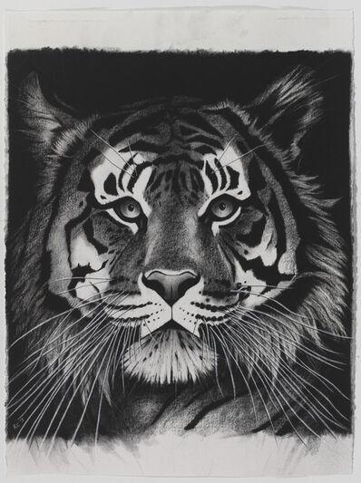 Rose Corcoran, 'Tiger on Black with Ruff'