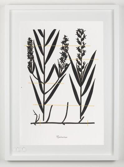 Edwin Monsalve, 'Expedición extinción (Epidendrum)', 2018