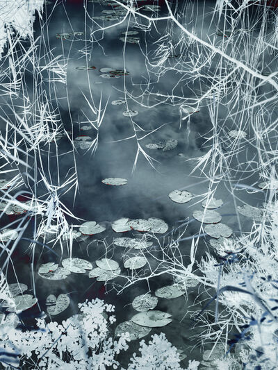 Santeri Tuori, 'Water Lilies 9 ', 2020