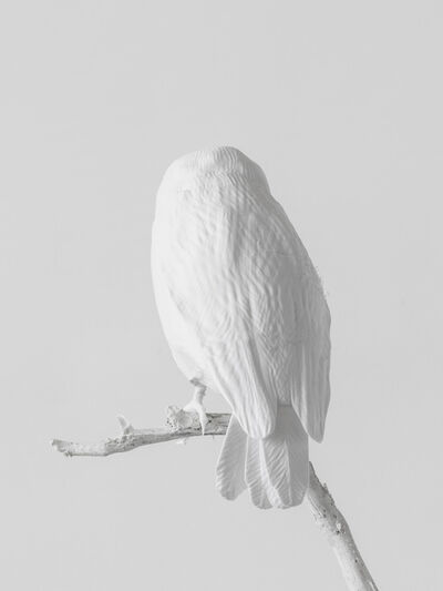 Axel Antas, 'Lost to Sight (Sceloglaux albifacies - back)', 2019