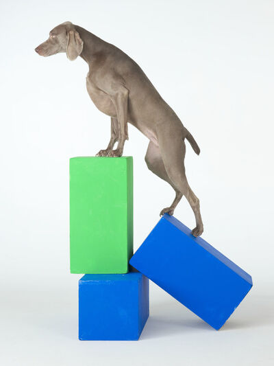 William Wegman, 'A Step Up', 2014