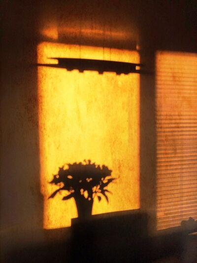 Donna Faiella, 'Silhouette Sunrise 1', 2020