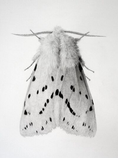 Jonathan Delafield Cook, 'Ermine Moth II', 2018-2019