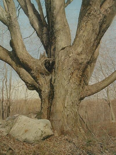 Trey Friedman, 'Trees on a Line #1, January 2008', 2008