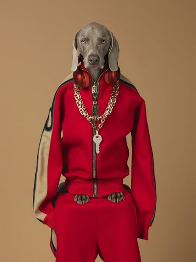 William Wegman, 'Qey', 2017