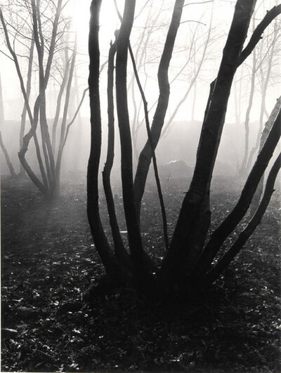 Barbara Morgan, 'Trees in Fog', 1941/1980