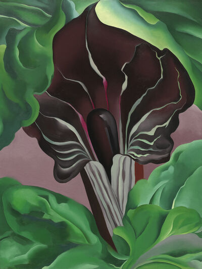 Georgia O'Keeffe, 'Jack-in-Pulpit No.2', 1930