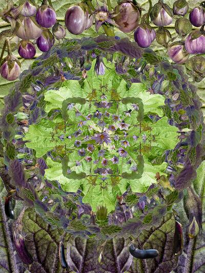 Muffin Bernstein, 'Eggplant Mandala', 2013