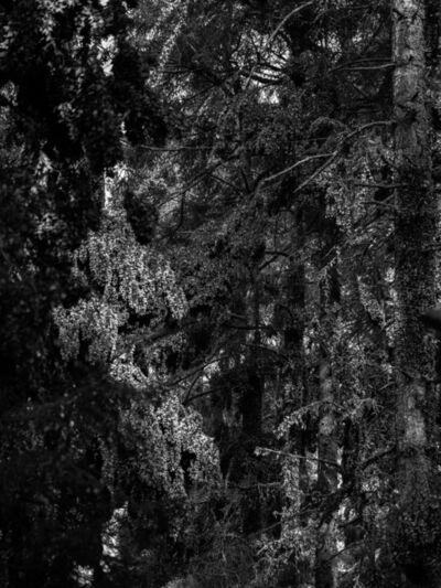 Axel Antas, 'Kaleidoscope Landscape (Symmetries III)', 2019