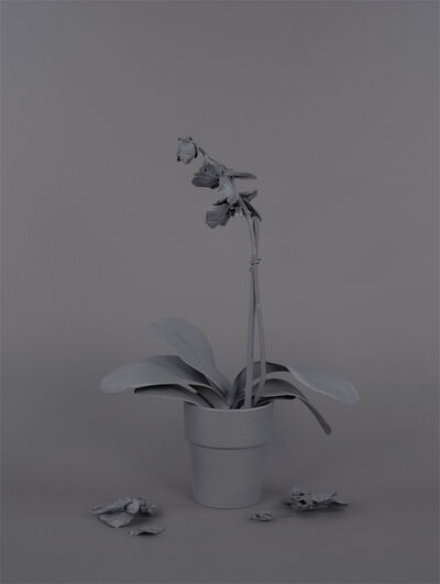 Stephanie Syjuco, 'Neutral Orchids (Phalaenopsis, mort)', 2016