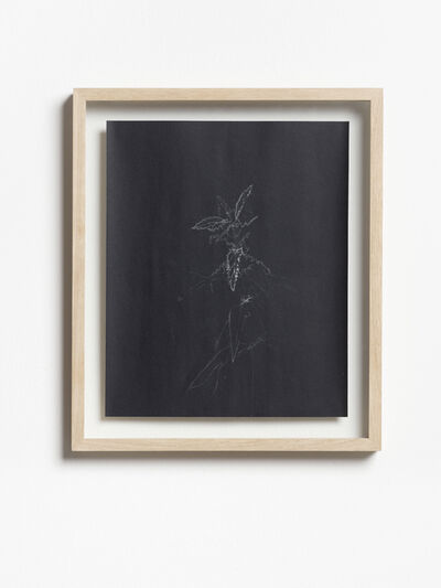 Michael Sailstorfer, 'Brennessel', 2019