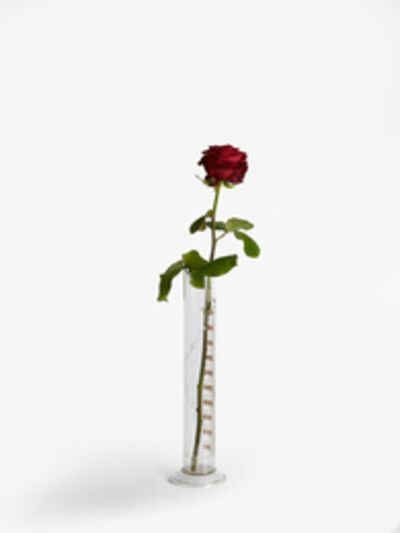 Joseph Beuys, 'Rose for Direct Democracy (Rose für Direkte Demokratie)', 1973