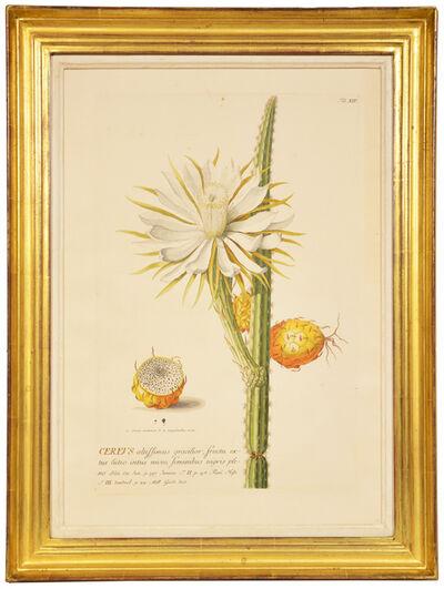 Christoph Trew & Dionysius Ehret, 'Christoph Trew & Dionysius Ehret, A Set of Three engraved botanical plates, hand-coloured copper engraved botanicals', 1750-1773.