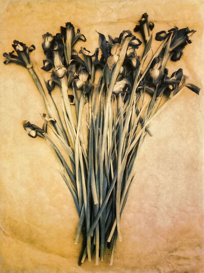 Diana Bloomfield, 'Debbie's Siberian Irises', 2018
