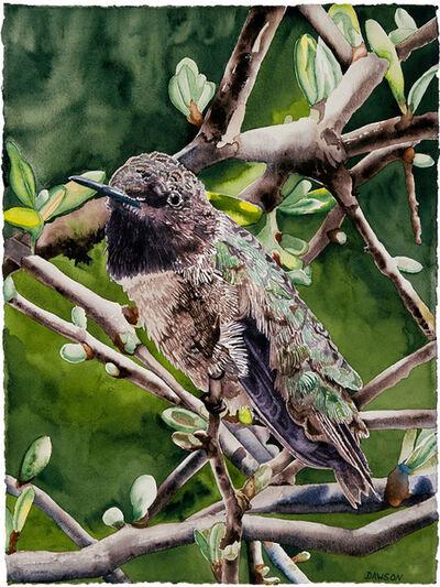 Carol Dawson, 'Male Black-throat Hummingbird', 2018
