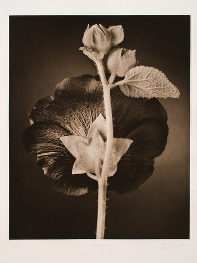 Tom Baril, 'Hollyhock', 1998