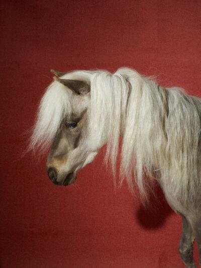Roe Ethridge, 'Celine Horse', 2016