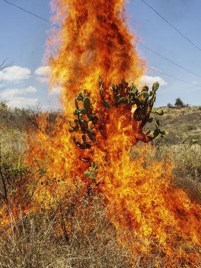 Pieter Hugo, 'Burning bush Oaxaca de Juárez', 2018