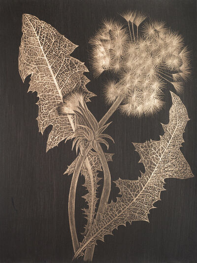 Margot Glass, 'Two Dandelions with Bud', 2019