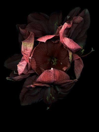 Jitka Hanzlová, 'Flowers #8, Untitled (Amarili Dark)', 2010