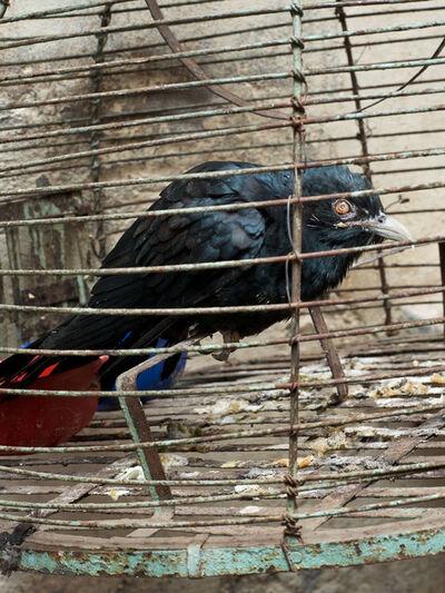 Ralf Schmerberg, 'Depression, Varanasi, India', 2013