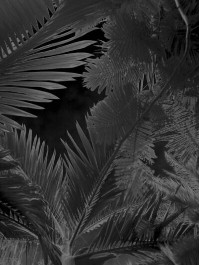 Karine Laval, 'Untitled #4, from the Black Palms Series', 2014