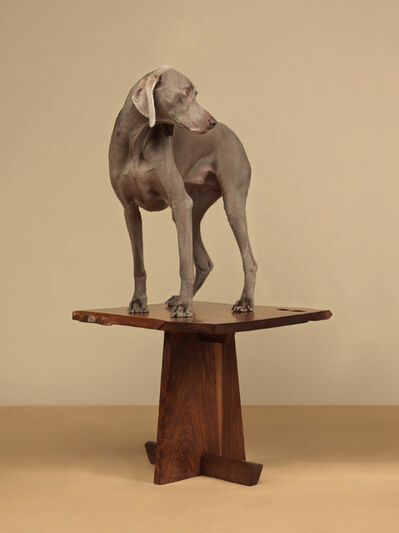 William Wegman, 'Tabled', 2015