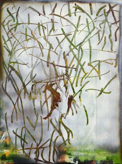 Sophia Schama, 'Grafitti', 2017