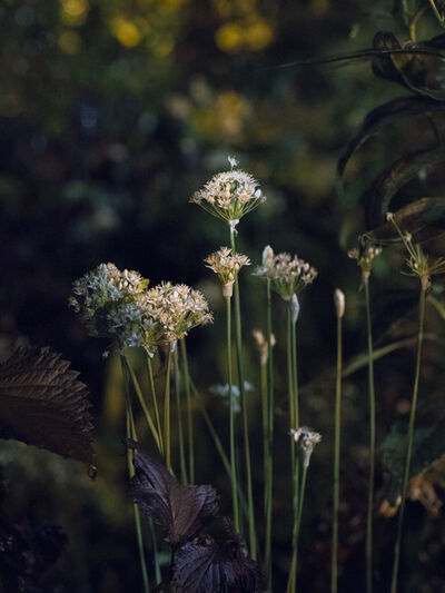 Anna Beeke, 'Midnight in the Garden #151', 2018
