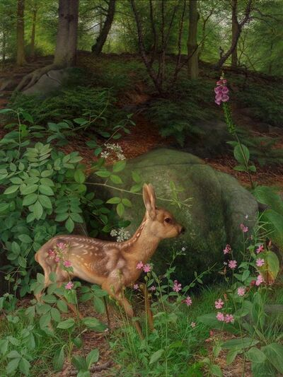 Raymond Booth, 'Young Roe deer in Adel Woods', 1999