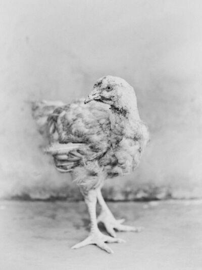 Bastiaan Woudt, 'Chicken', 2017