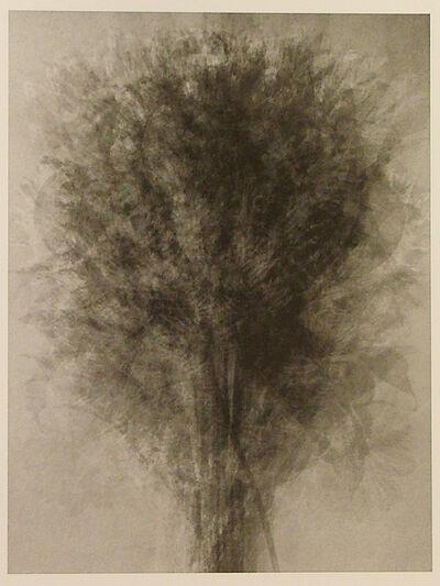 Idris Khan, 'Blossfeldt... After Blossfeldt 'Art Forms in Nature'', 2008