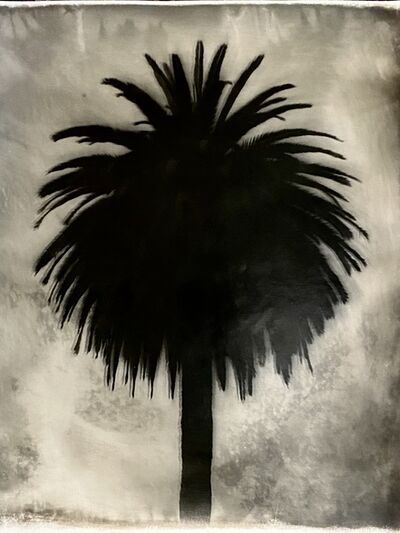 Robert Stivers, 'Palm 2', 2019